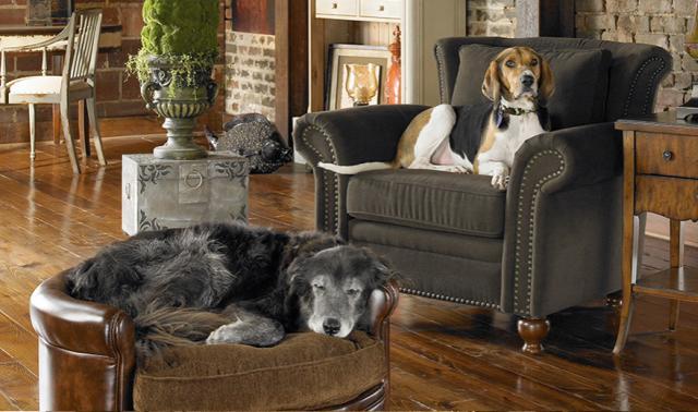 Amerikai lakberendezés kutyák a lakásban