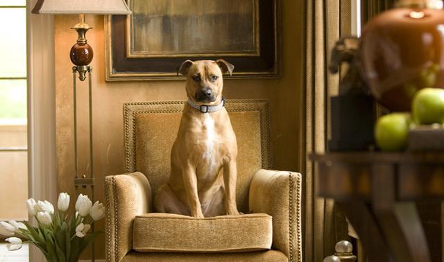 Kutya a fotelban