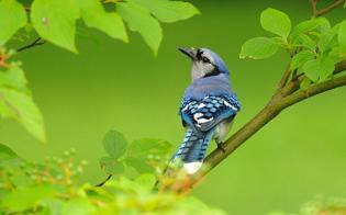 Hogyan alakítsunk ki madárbarát kertet?