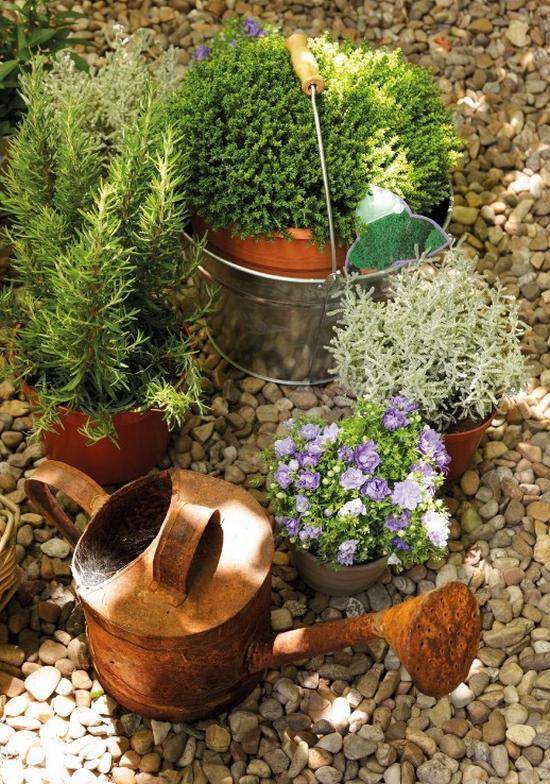 Nővények és fűszernövények dekoráció