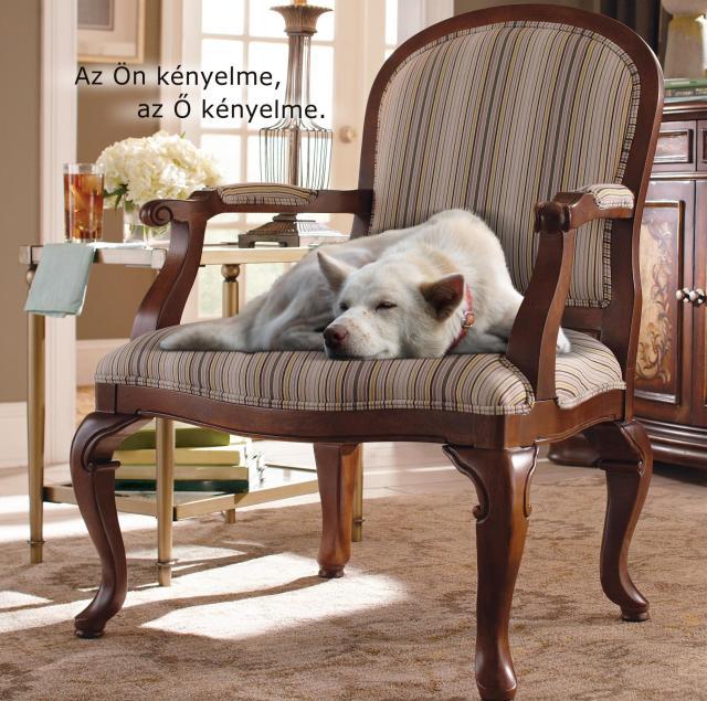 Klasszikus szék és kutya