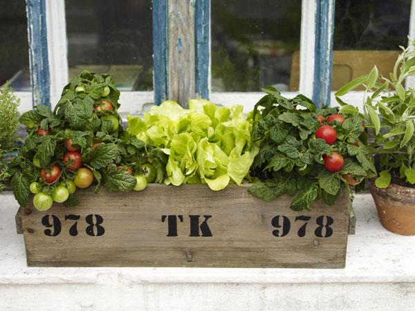 Saláta és paradicsom balkonládában