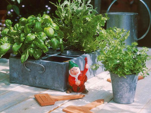 Ón tálca fűszernövényekhez