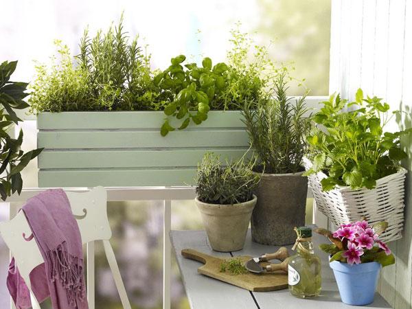 Fa balkonláda fűszernövényeknek és zöldségnek