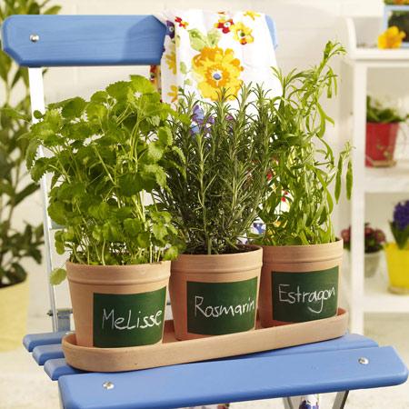 Cserepes fűszernövények felirattal