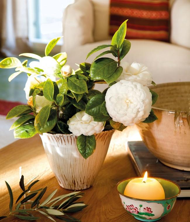 Cserepes növény dekoráció