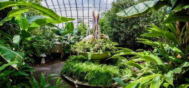 Növényház trópusi növényekkel