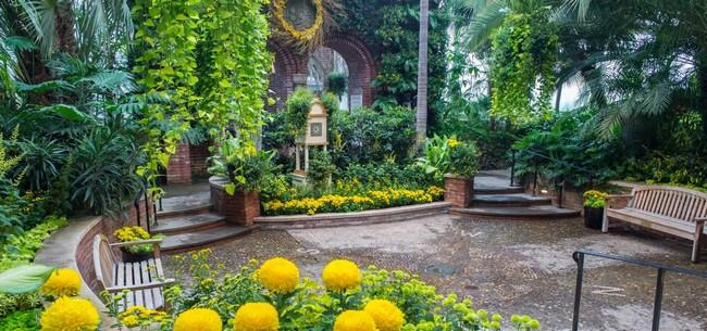 A pittsburghi Phipps Növényház és Botanikus Kert sárga virágokkal