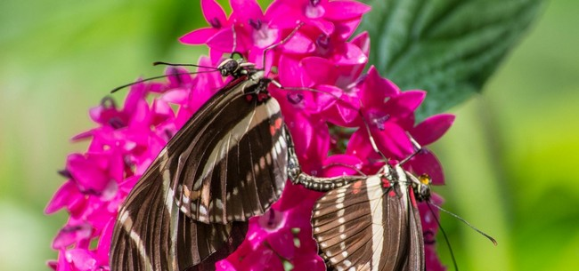 Növény a pillangóházban