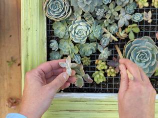 Látványos dekoráció a teraszon - Élő növények képkeretben