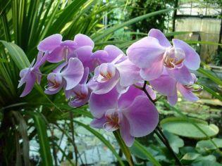 Hétvégén újra várja látogatóit az orchidea és bromélia kiállítás