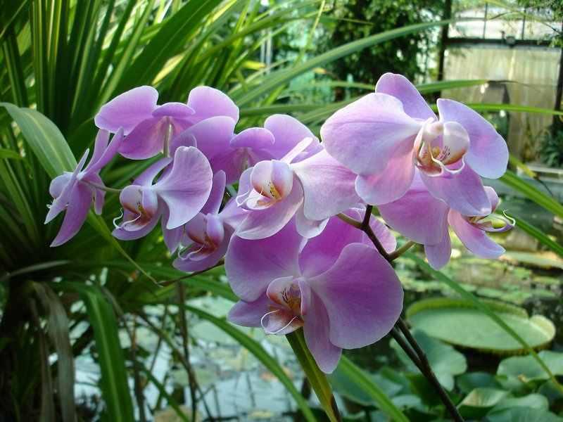 Orchidea a lakberendezésben