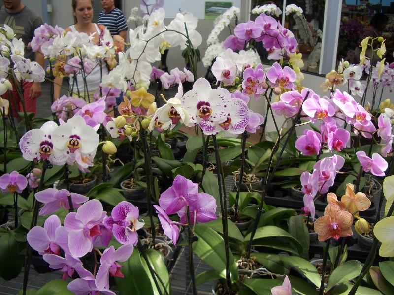 Orchideák lilák