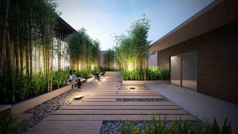 Bambusz a kertben mint sövény vagy térelválasztó