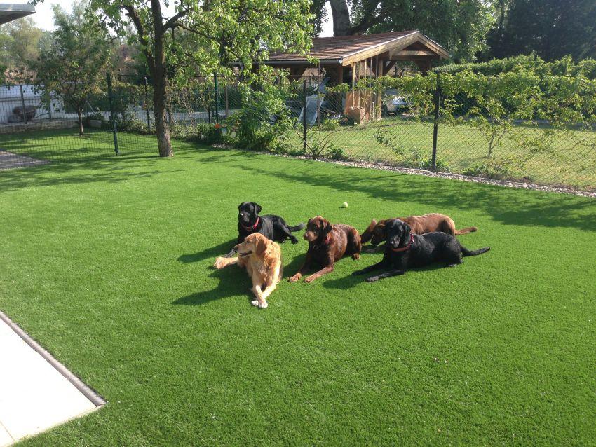 Kutyabarát műfű Holland Pázsit