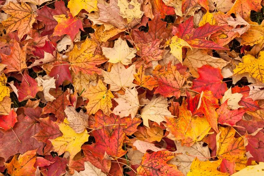Őszi avar színes