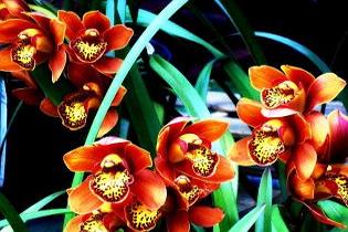 Varázslatos orchidea és bromélia kiállítás négy napon át!