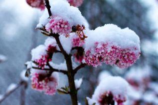 7 télen virágzó növény, amely megszépíti kertedet a hideg hónapokban