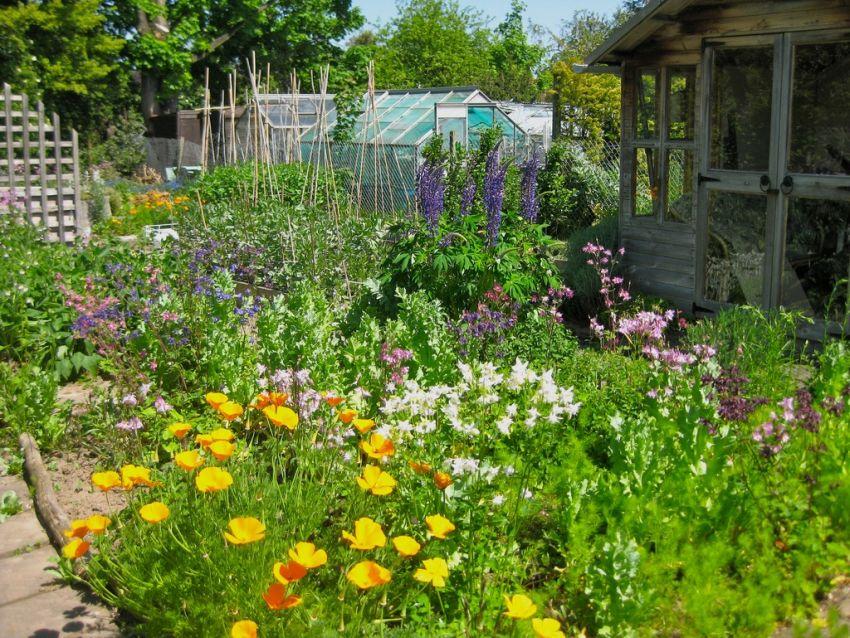 Kert adottságai kerti növények