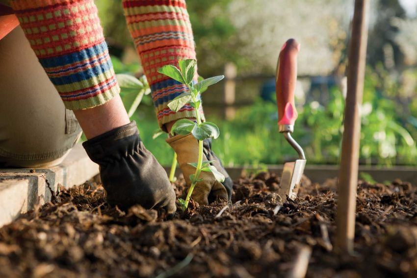 Növény ültetése kertben
