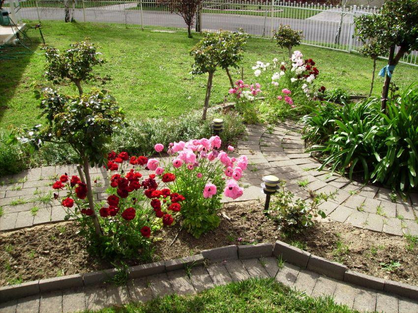 Virágok, fák a kertben