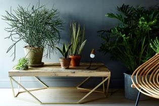 10 szobanövény, mellyel otthonod sötétebb részeit is díszítheted