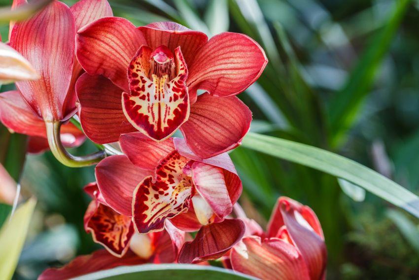 Orchidea ápolás
