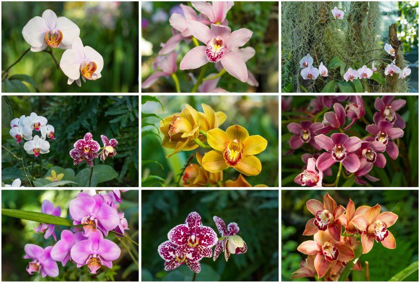Orchidea kollázs