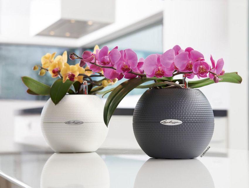 Orchidea a lakásban kaspóban öntözési tanácsok
