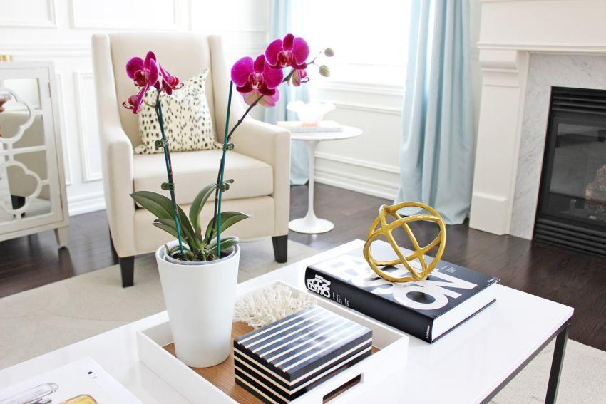 Orchidea a lakásban