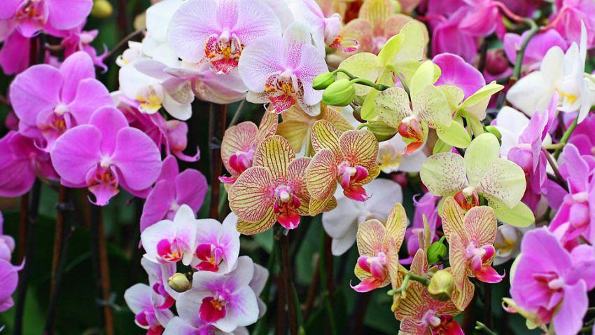 Orchidea kompozíció