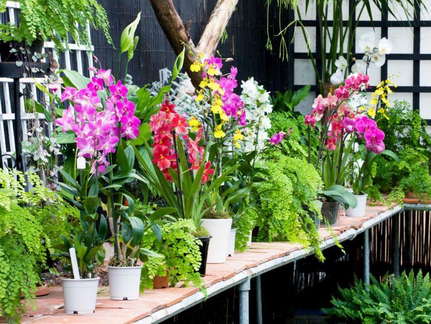 Orchidea a télikertben