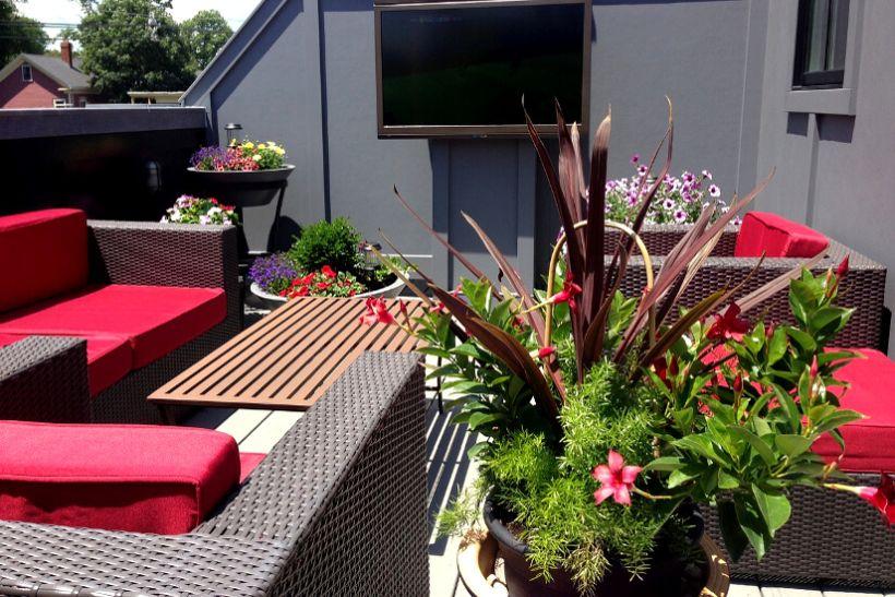 Balkon nővények és virágok