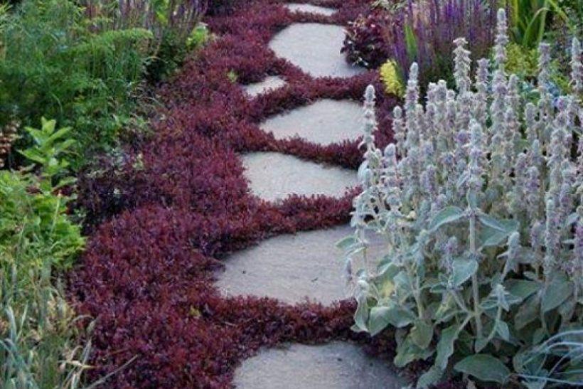 Kerti út talajtakaró növényekkel