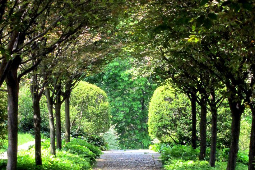 Kerti út a fák alatt