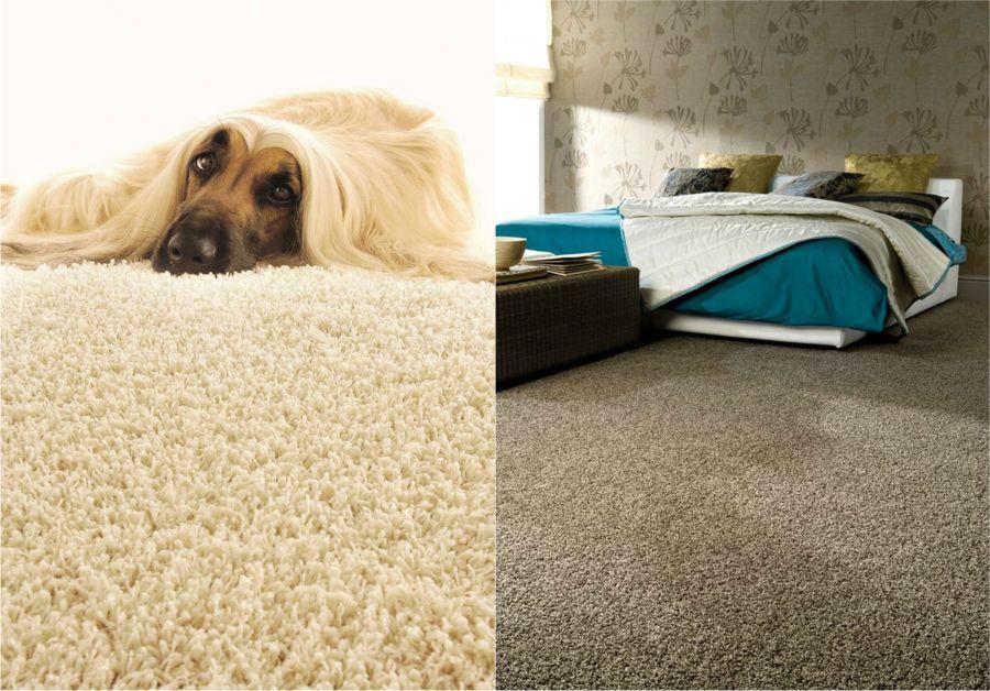 Leguan padlószőnyeg kutya és cica barátoknak