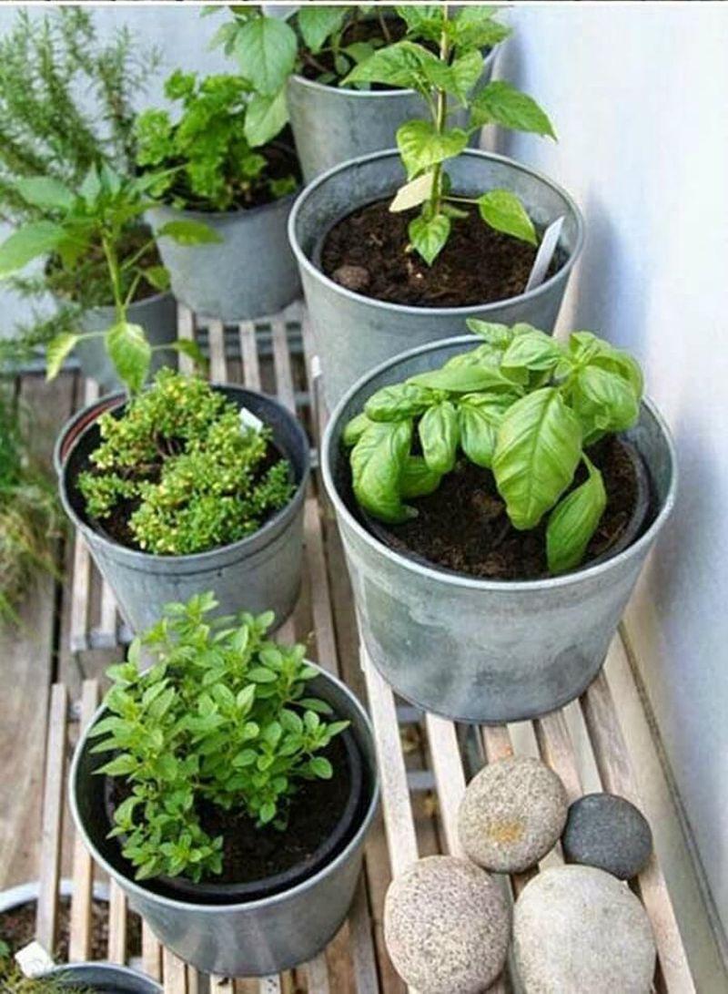 Fűszernövények teleltetése