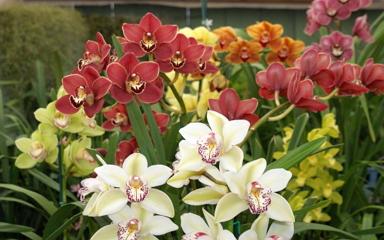 Négy napos lesz az őszi orchidea és bromélia kiállítás - Nyerj belépőt!