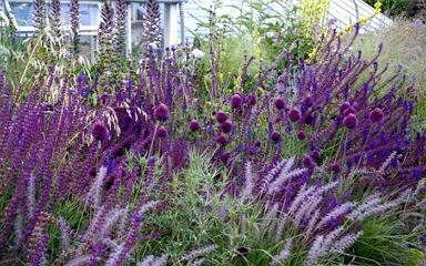 Az év színe 2018-ban meghódítja a kerteket is