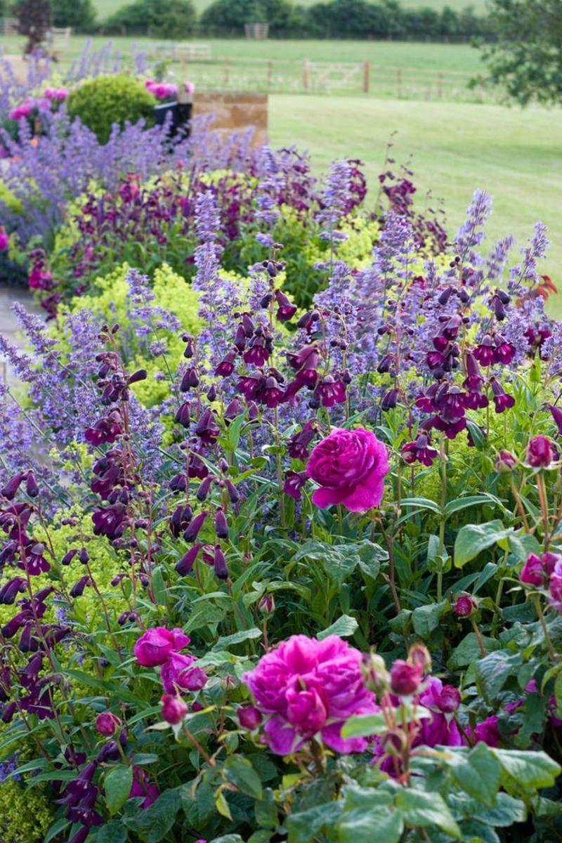 Rózsaszín és lila kerti virág