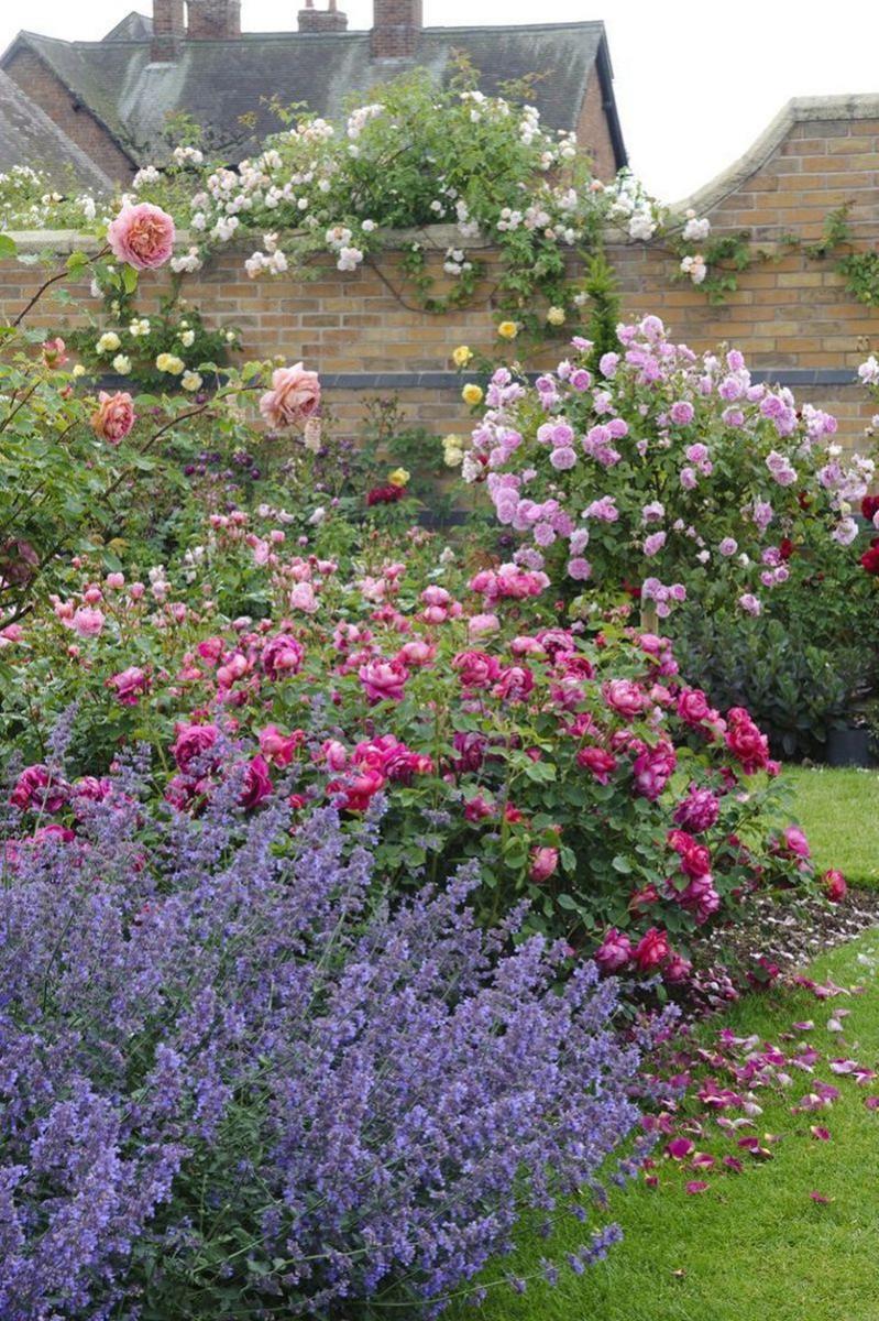 Rózsa a kertben