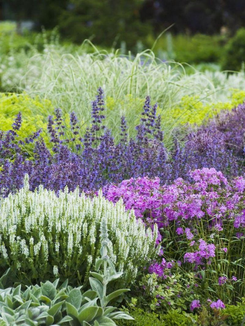 Színes kerti virágok