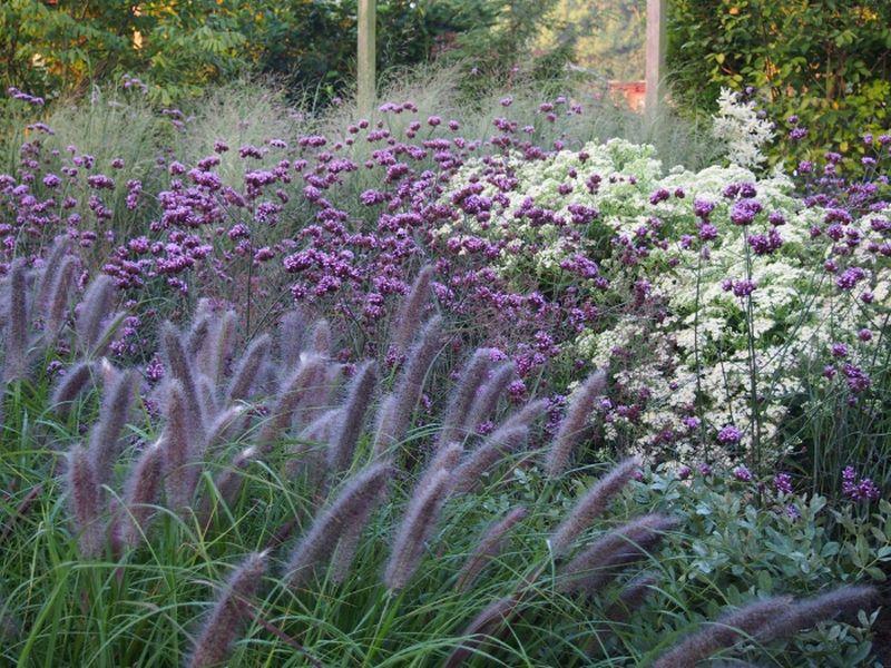 Lila kerti növények több árnyalatban