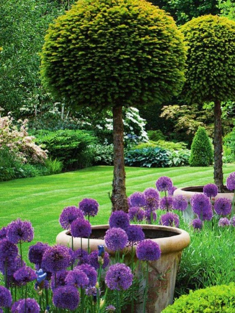Gömb alakú lila növények