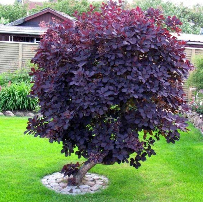 Szoborszerű fa a kert közepén