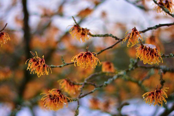 Narancssárga virágzat
