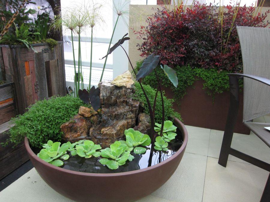 Oázis vízinövényekkel