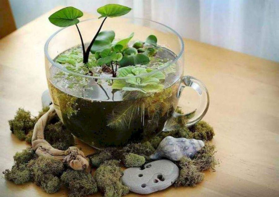Mini oázis vízinövényekkel