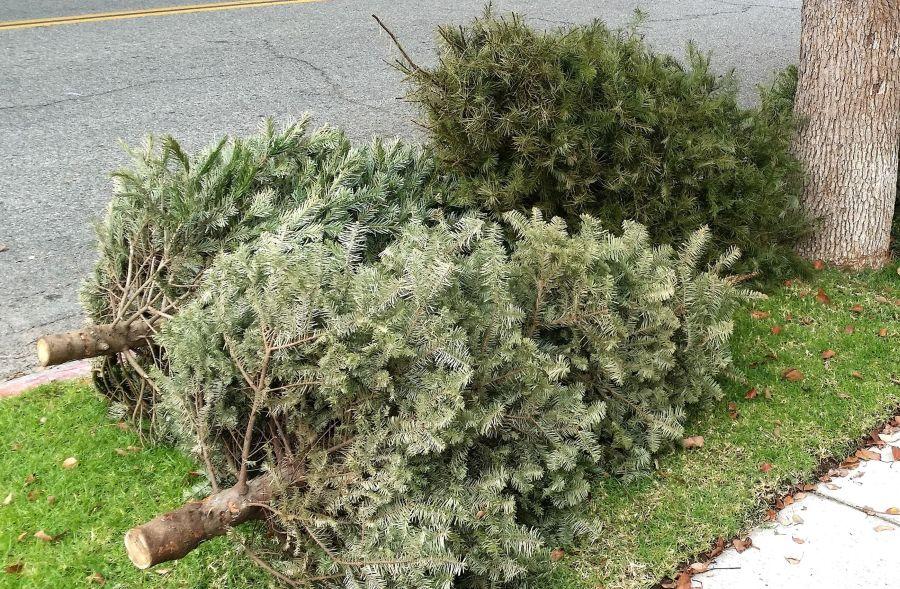 Kidobott fenyőfa újrahasznosítása