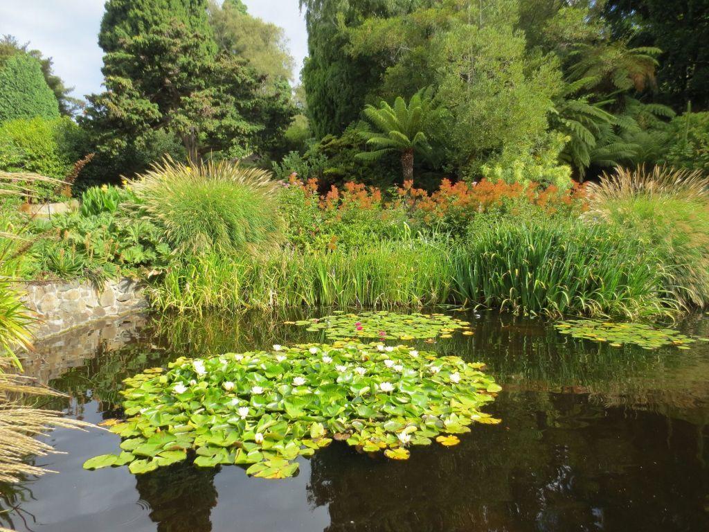 Kerti tó gazdag növényzettel